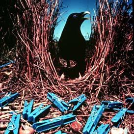 Un pergolero con su colección de objetos azules